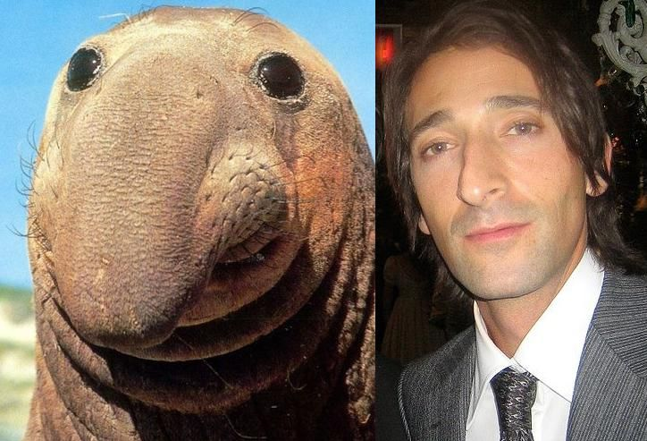 35 Celebrity look alik...