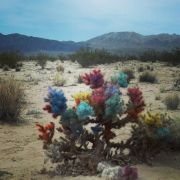 Rainbow cactus in Twentynine Palms, CA