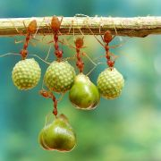 Ants holding seeds