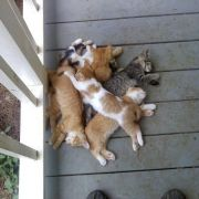 A pile of kittens.