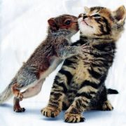Squirrel Kissing a Kitten