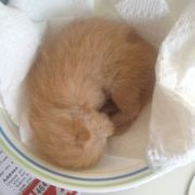 Found an abandoned 4-day old kitten underneath our porch. My mom took him in and is trying to help him survive.