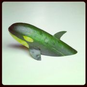 The illusive green cucumber whale!