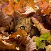 Kitten observing from the leaves.