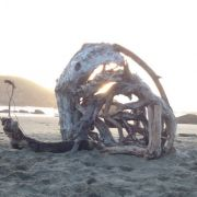 My brother made this snail in Oregon with driftwood and whatever he found on shore.