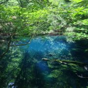Went hiking in Shirakami-Sanchi, Japan last week. The lakes and forests there (along with Yakushima) were the inspiration for Princess Mononoke's landscapes