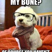 Hipster Dog needs to find his bone.
