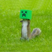 Creeper squirrel feeder.