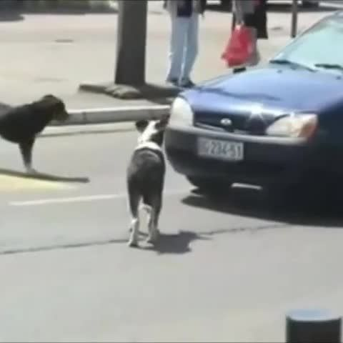 Even the dogs are insane on the roads