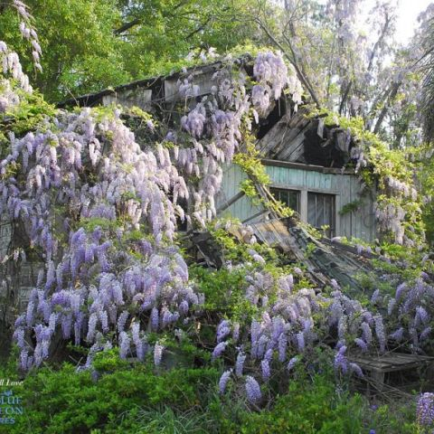 Abandoned shack overrun by nature.