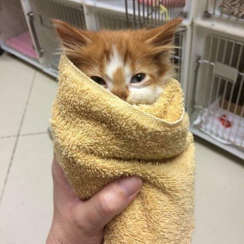 My local animal shelter posted this little purrito