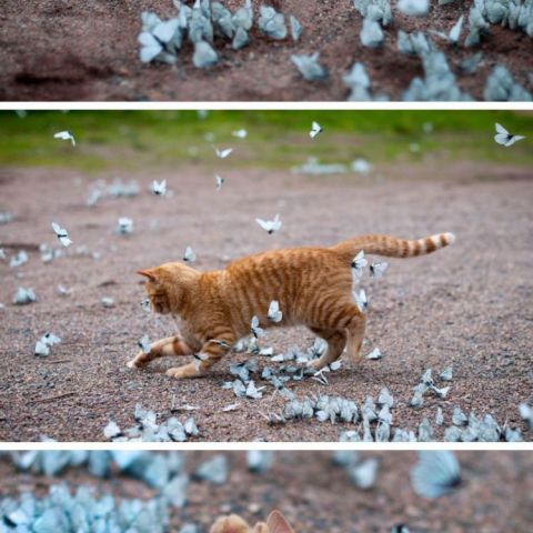 Garry playing with blue butterflies