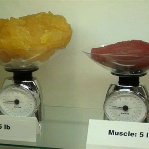Five pounds of fat next to five pounds of muscle
