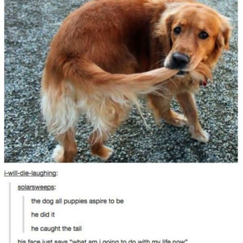 Tumblr : Animal Edition