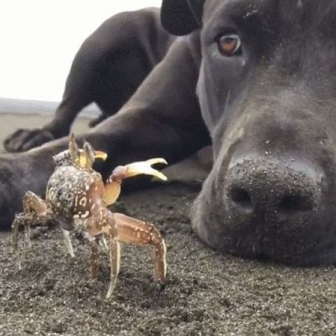 Dog digs out a crab at the beach. They instantly become friends
