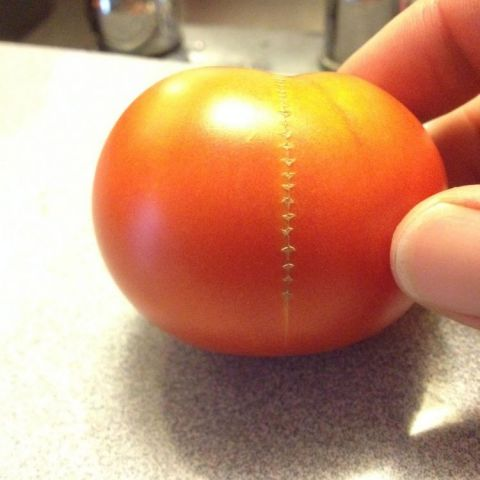 A tomato from our garden got a crack and stitched itself...