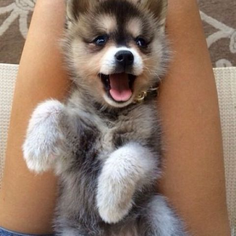 Tummy tickles is happiness