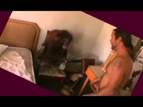 Wildboyz Orangutan visits Chris & Steve-O's Hotel room