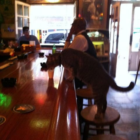 Bartender just poured this cat a shot of milk at the bar in New Orleans