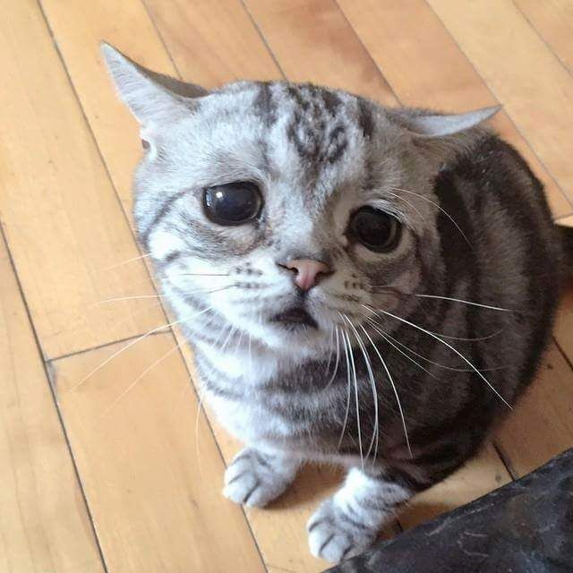 Saddest Kitty on the Interwebs