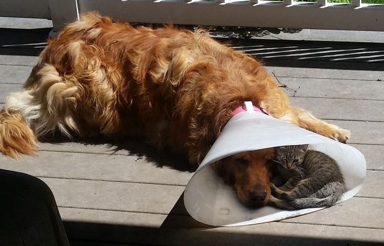 Nice to have a buddy when you're down & out
