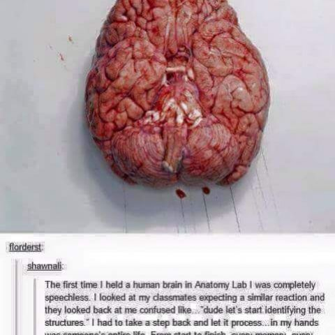 The brain is amazing.