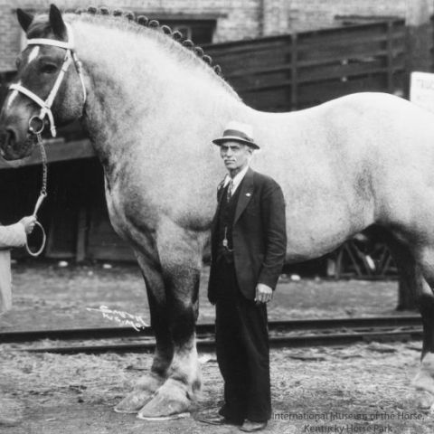The World's Biggest Horse, Brooklyn Supreme
