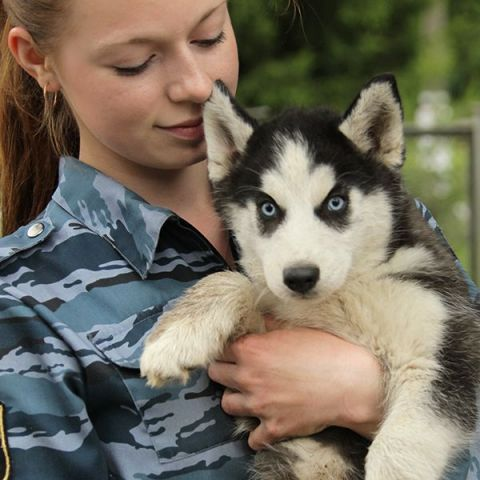 servicewoman with blue-eyed Siberian husky puppy