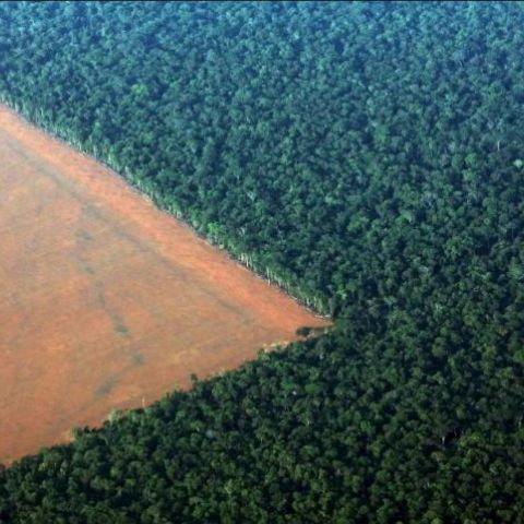 Deforestation in Amazon Rainforest, Brazil