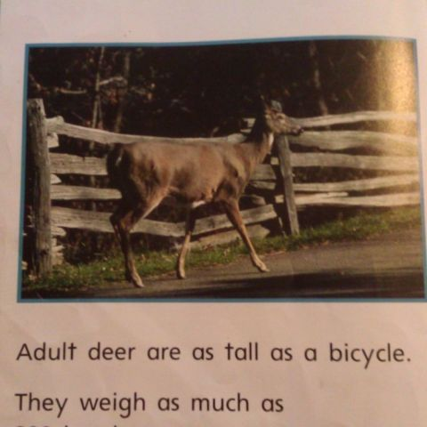 From my daughter's library book. This is how we weigh things in America.
