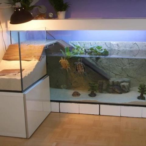 These turtles have a nicer apartment than I do