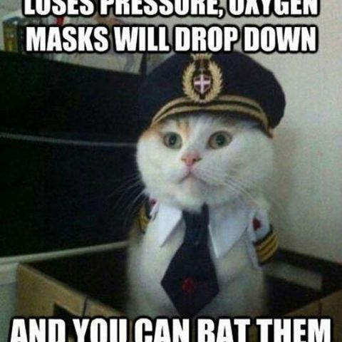 Captain Kitty giving instructions before the flight