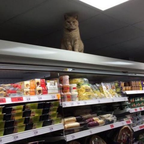 Khajiit has wares if you have coin.