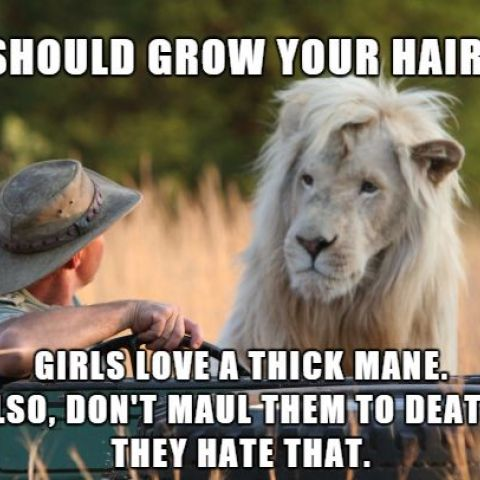 advice lion