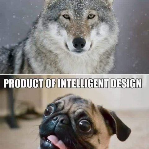 Evolution or design?