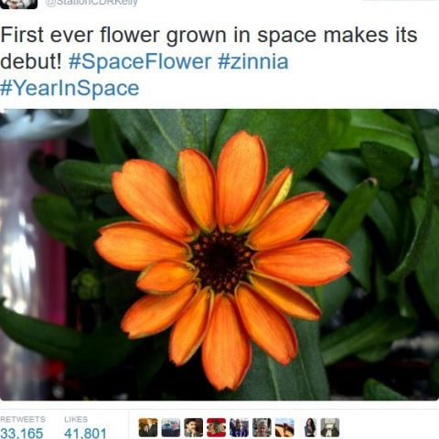 First flower grown in space!