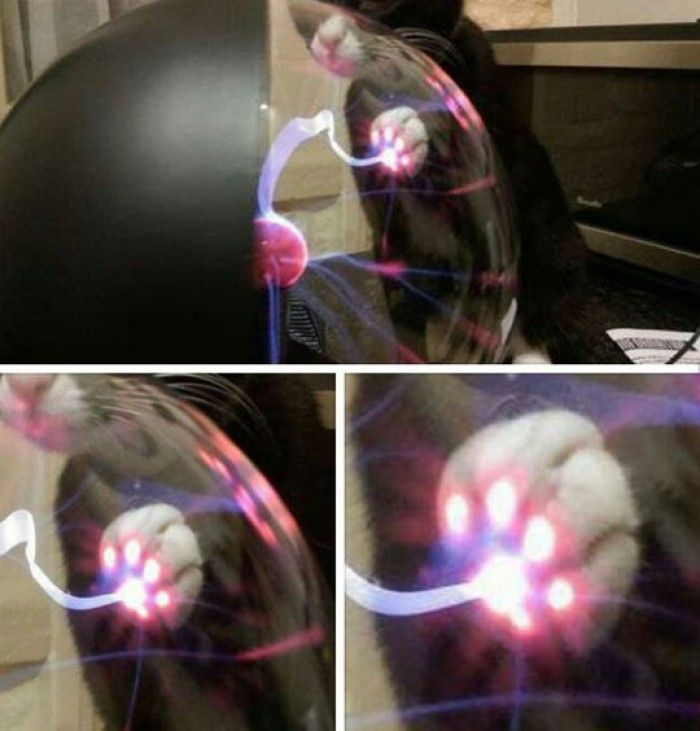 This is what Happens When A Cat Touches A Plasma Ball