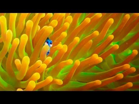 Exclusive! A Brand New 'Finding Dory' Trailer