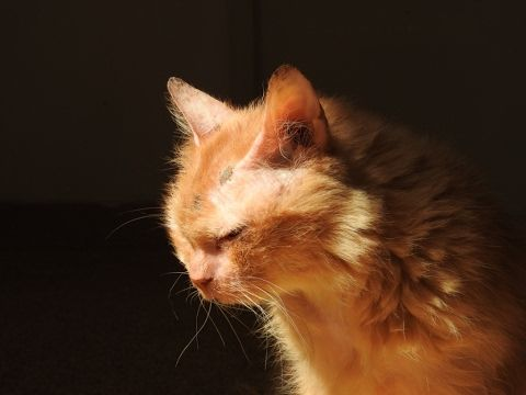 Abandoned at 17 - new beginning for an elderly cat