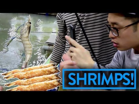 WE WENT SHRIMPING IN ASIA - FUNG BROS FOOD