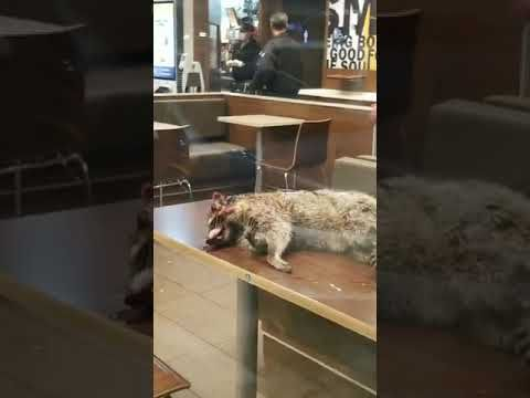 San Francisco Homeless man brings dead raccoon to a local McDonalds.