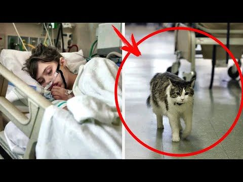 The hospital cat asked to go into a patient room... Later, the whole world got to hear this story...