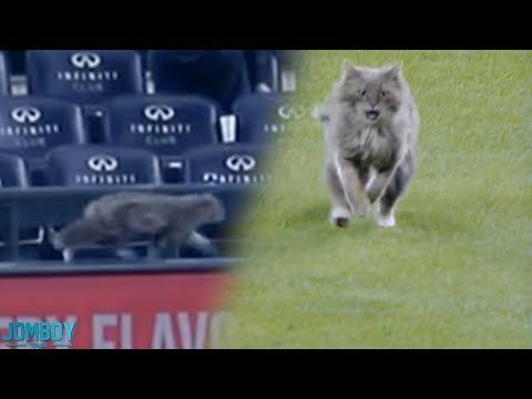 Cat on the field, a breakdown