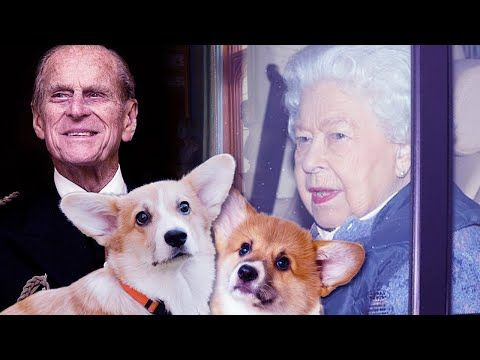 The Queen being comforted by two new puppies following the sad news of Prince Philip | Royal Insider